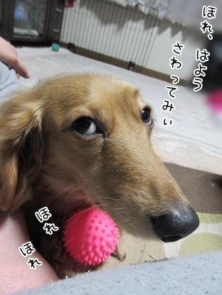 kinako4132.jpg