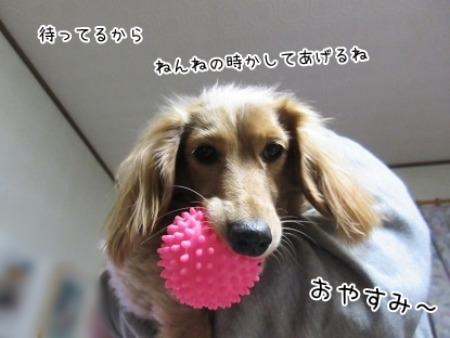 kinako4133.jpg