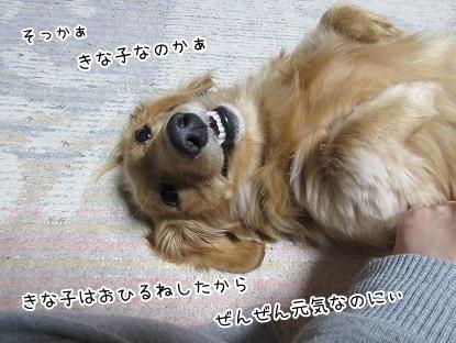 kinako4138.jpg