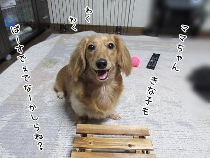 kinako4147.jpg