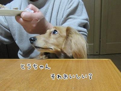 kinako4153.jpg