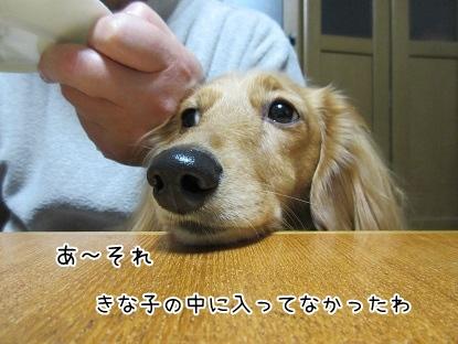 kinako4154.jpg