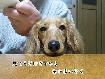 kinako4155.jpg