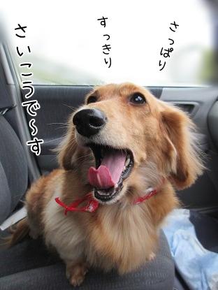 kinako4157.jpg