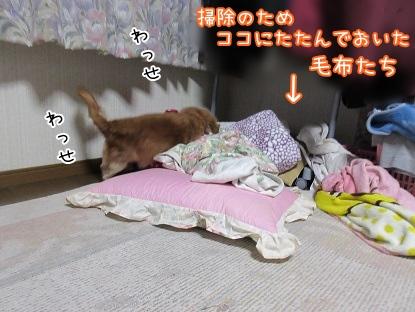 kinako4162.jpg
