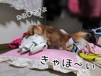 kinako4163.jpg