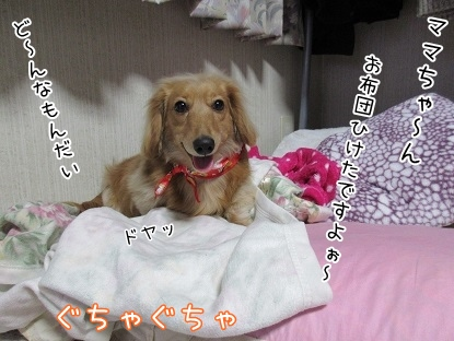 kinako4166.jpg