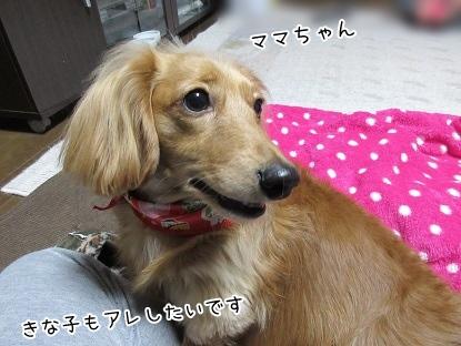 kinako4167.jpg