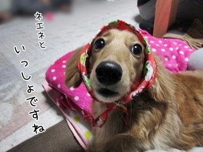 kinako4171.jpg