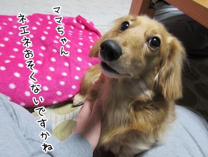 kinako4179.jpg