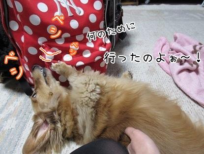 kinako4187.jpg