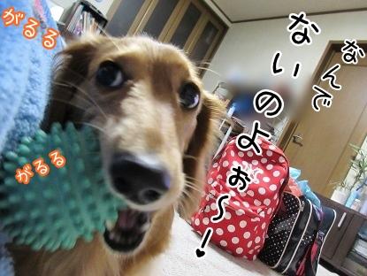 kinako4188.jpg