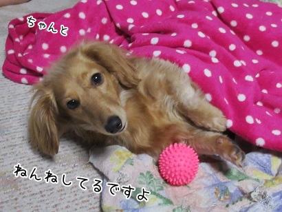 kinako4190.jpg