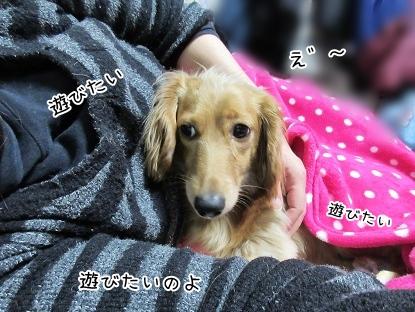 kinako4193.jpg