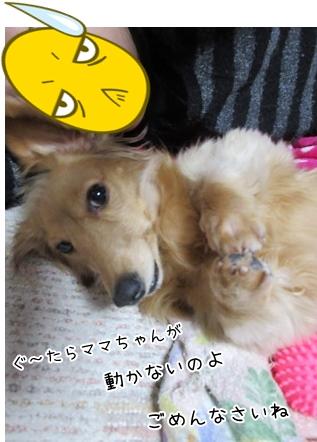 kinako4194.jpg