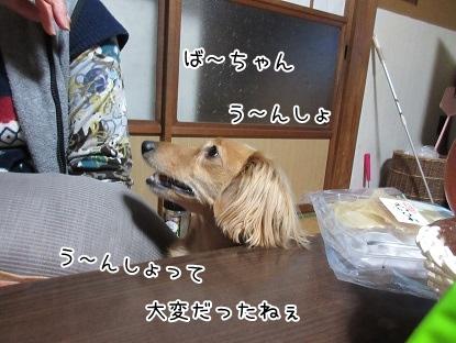 kinako4201.jpg