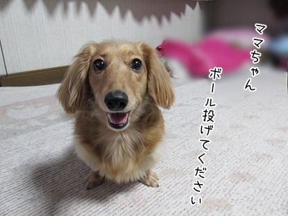 kinako4207.jpg