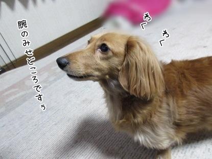 kinako4208.jpg