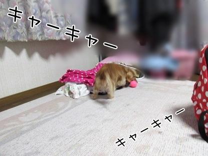 kinako4210.jpg