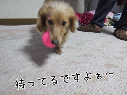 kinako4211.jpg