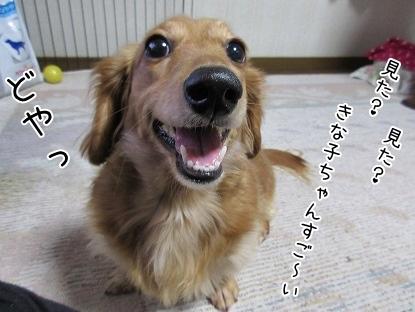 kinako4212.jpg