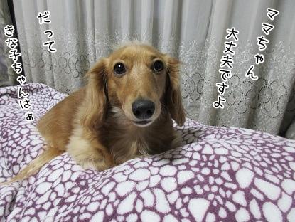 kinako4222.jpg