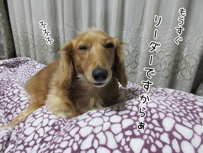 kinako4223.jpg