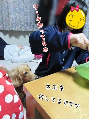 kinako4224.jpg