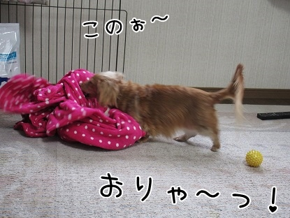 kinako4233.jpg