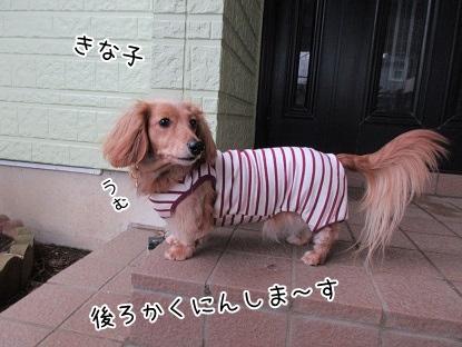 kinako4239.jpg