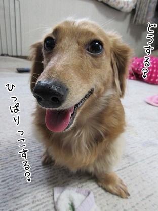 kinako4243.jpg