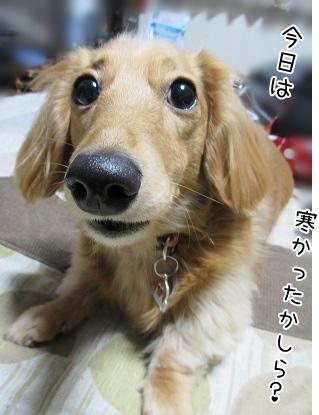 kinako4247.jpg