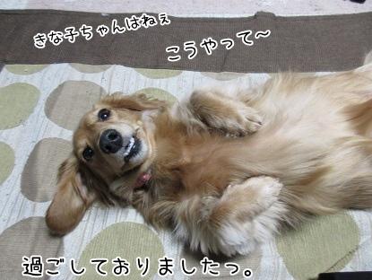 kinako4250.jpg