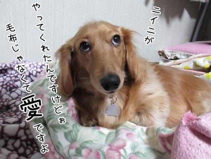 kinako4259.jpg
