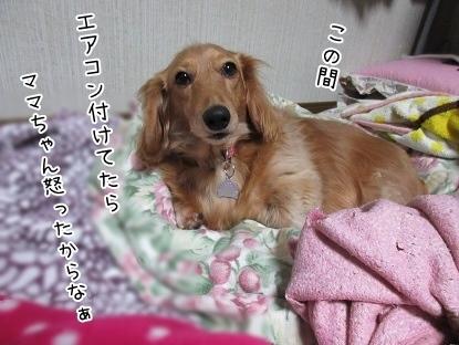kinako4261.jpg
