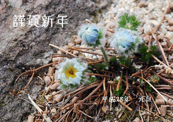 nenga16kataokasou.jpg