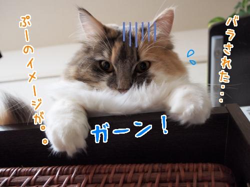 PC130030_1.jpg