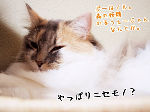 PC140056_2.jpg