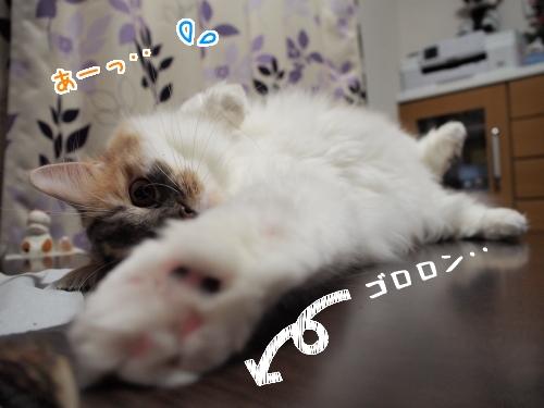 PC190075_1.jpg
