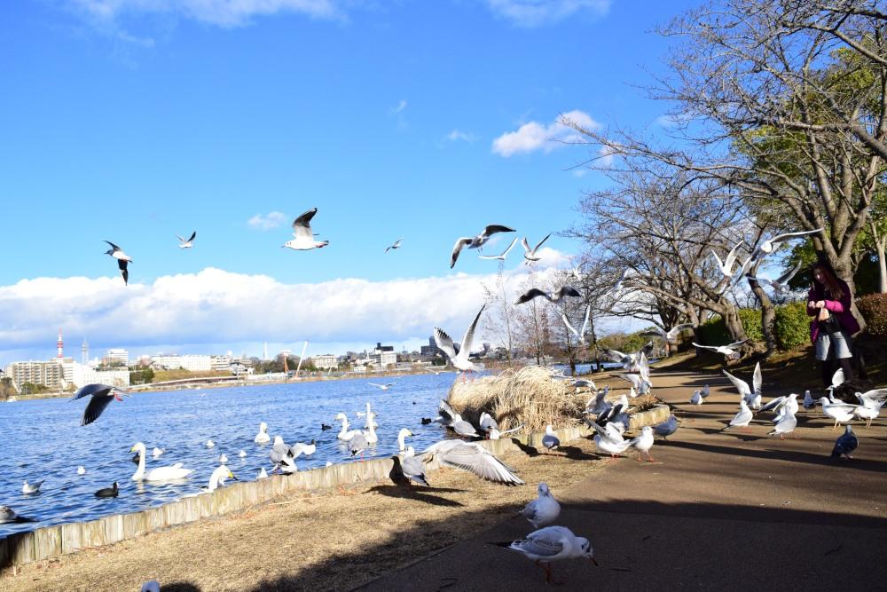 _千波湖DSC_0117