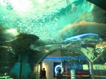 りさーちゃーのたまご-水族館1