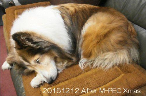 09 500 20151212 Sleeping Erie After M-PEC Xmas