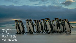 02 300 20151221 0701 penguins