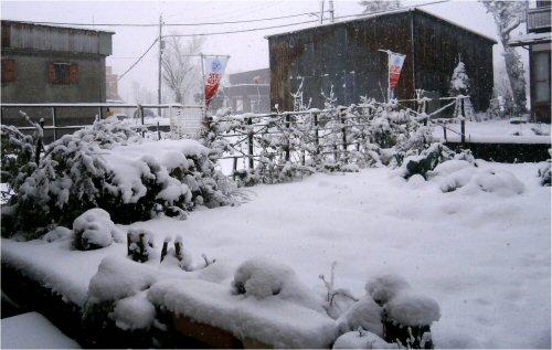 02 500 20151227 snowy LLgarden