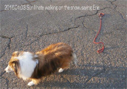 07 500 20160103 Erie hates snow