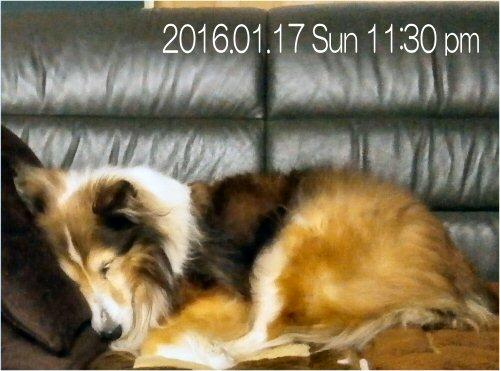 04 500 20160117 2330 Erie on sofa