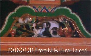 02g 300 20160131 眠り猫 from NHK