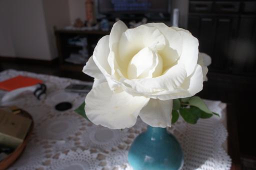 白いバラ4