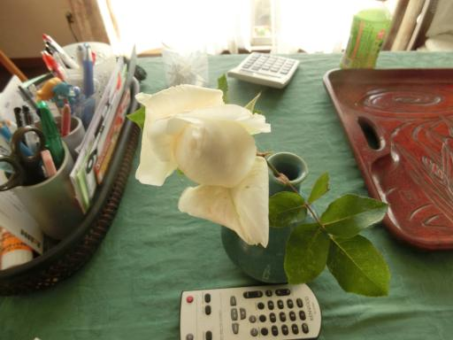 白いバラ5