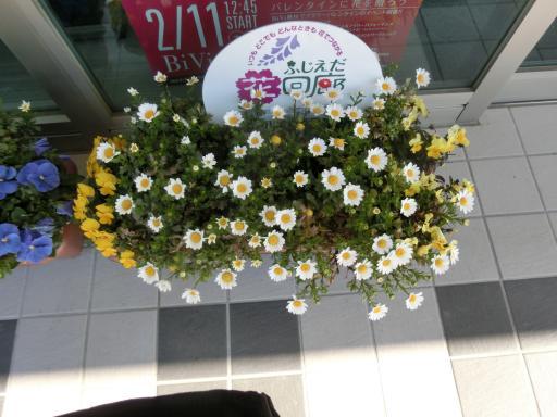 農協のお花